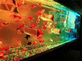 金魚6.jpg